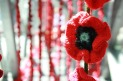 img_6678remembrance-day-2013