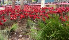 Anzac Day Planting Fed Square 2015