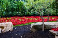 5000 Poppies Project Melbourne Flower and Garden Show March 2015 Photographer Clare Takacs - Copy